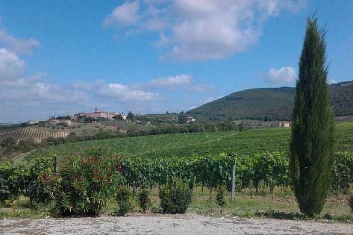view of Tuscany vineyards and hills