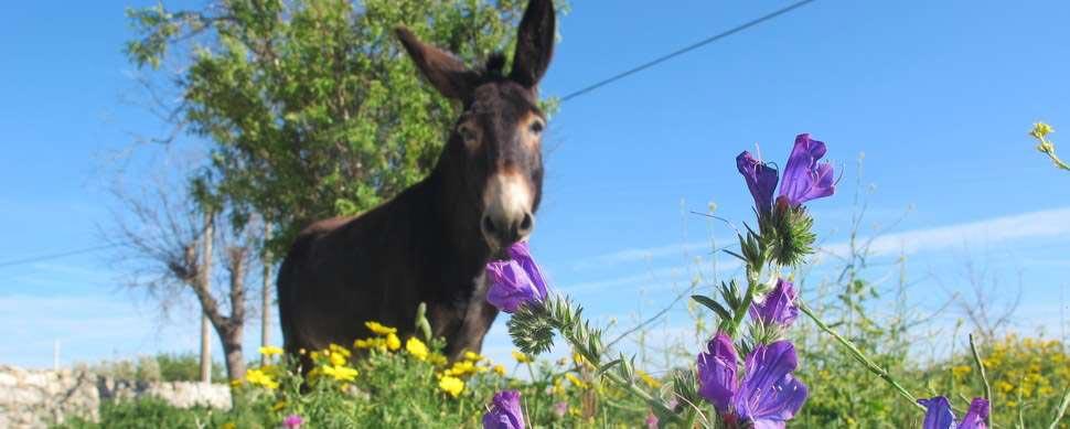 Donkey on green meadow in Sicily