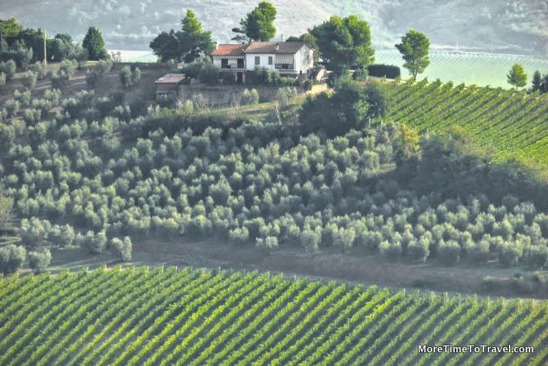 views-of-vineyard-in-umbria