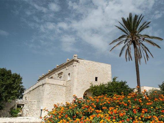 Sicily Palm tree