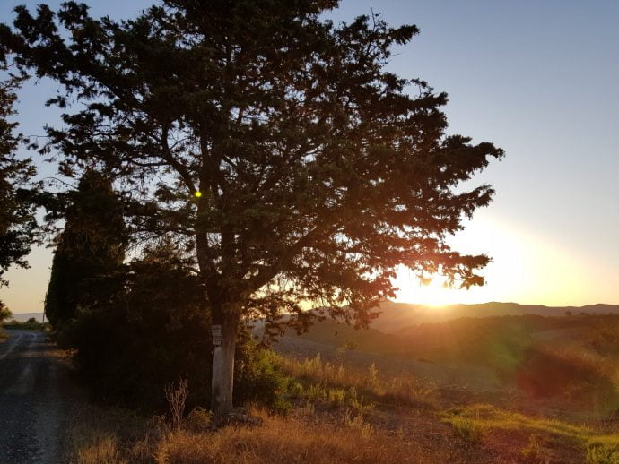 Sun setting behind a valley with a tree in the foreground