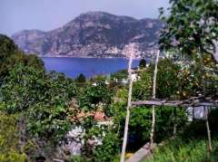 Lemon gardens and idyllic sea view of amalfi coast.