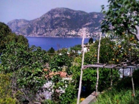 stunning sea view from lemon gardens in Amalfi