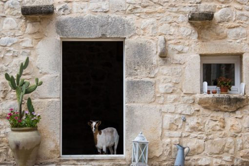 Sicily Guest Photo Goat in Doorway