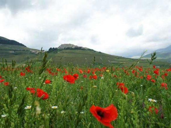 Spring in Sicily with flowers and hills